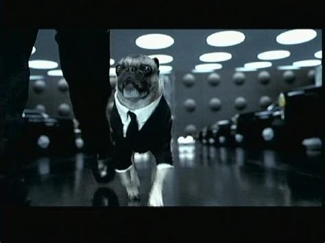 the pug from in black in black 2 2002