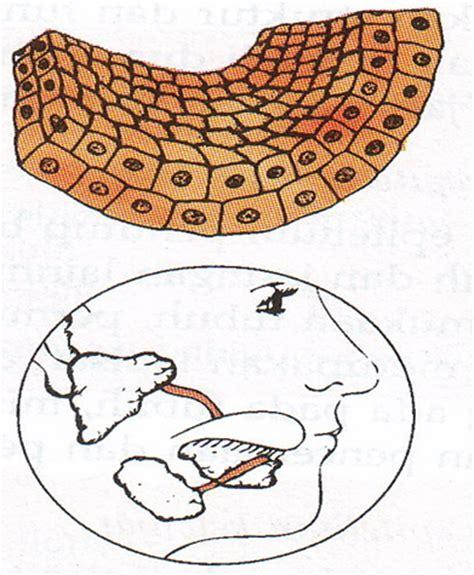 Kubus Kulit 2 indikator 14 erudio scientia biology