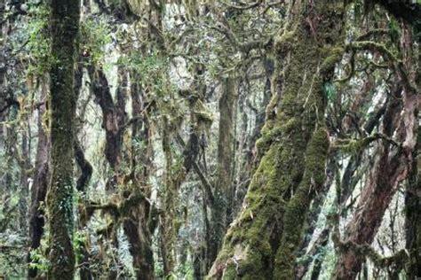 nepal reisebericht quot ghandruk nach tadapani quot - Urige Wandlen