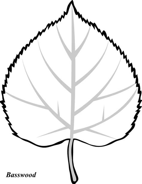 printable leaves with lines leaf print out coloring home