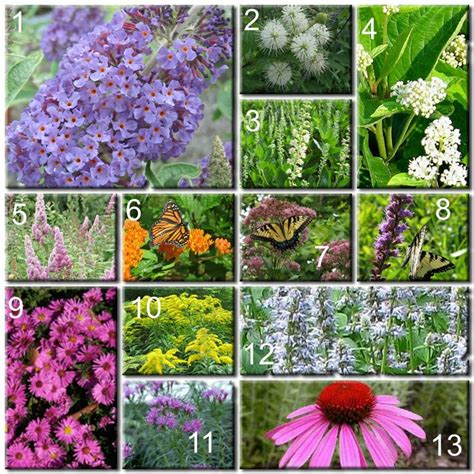 Build Your Own Butterfly Garden Flowers For Butterfly Garden