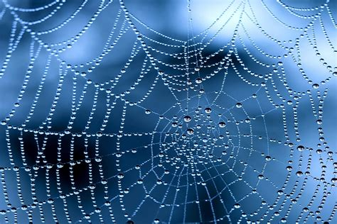 hd web software free morning dew on spider web hd wallpaper and background