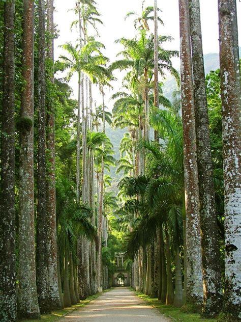 Um Botanical Gardens 25 Melhores Ideias Sobre Caminhos De Jardim No Pinterest Caminhos Passarelas E Passarela De