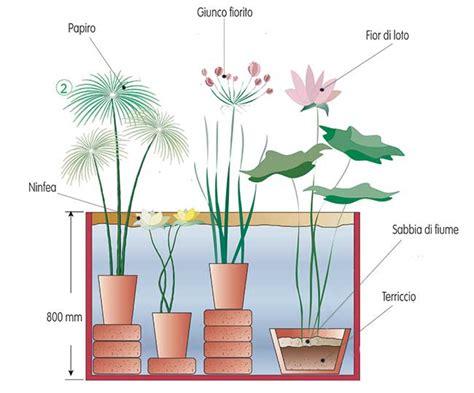 vasi per piante acquatiche piante acquatiche come sceglierle piantarle e curarle