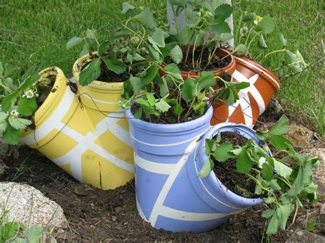 pvc pipe strawberry planter strawberries pinterest