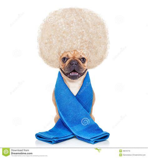 wellness puppy wellness stock photo image 48516716