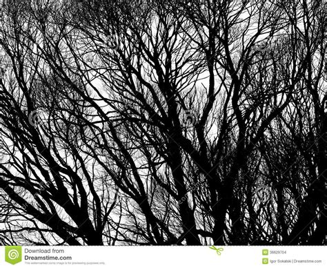 black and white tree pattern tree silhouettes isolated stock photo image of nature