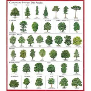 trees types best 25 tree identification ideas on pinterest tree