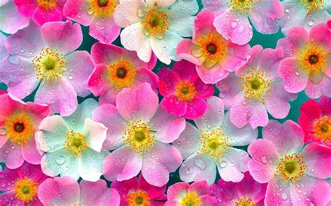 flower wallpaper new 2015 30 beautiful flower wallpapers