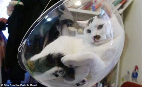 swing that cat the 163 30 bubble bowl chair for cats daily mail online