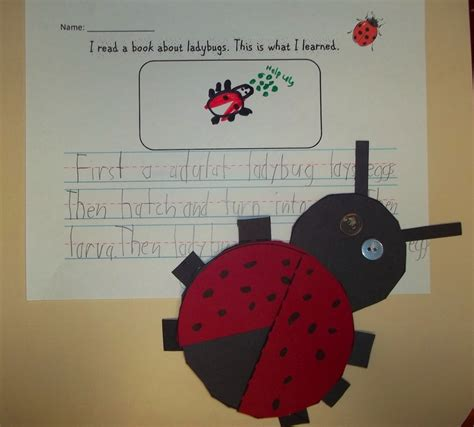 ladybug tea books 78 best images about ladybugs in the classroom on