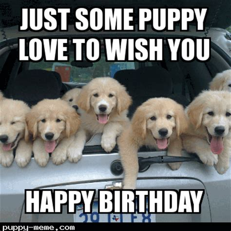 Puppy Birthday Meme - pups