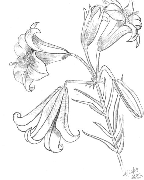 tiger lily coloring page 218 best coloring images on pinterest bible coloring