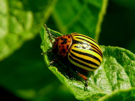 garden insect pests pictures 5 common garden insects and pests gardenswag