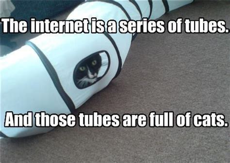 Internet Cat Meme - the internet is a series of tubes and those tubes are