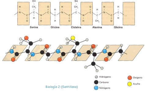 define cadena polipeptidica aula virtual de biolog 237 a