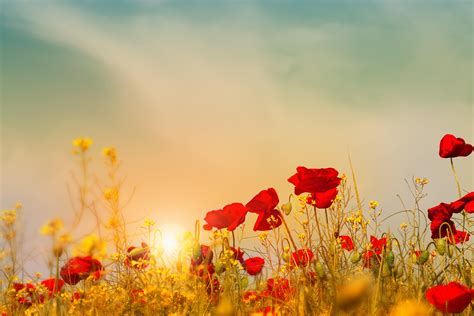day images anzac day fabulous