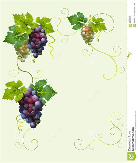 Ornate Cornice Grape Frame Stock Photos Image 9793833