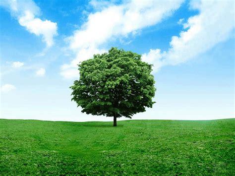 Syari Indah Hijau gambar pemandangan padang rumput wallpaper hd indah cerah