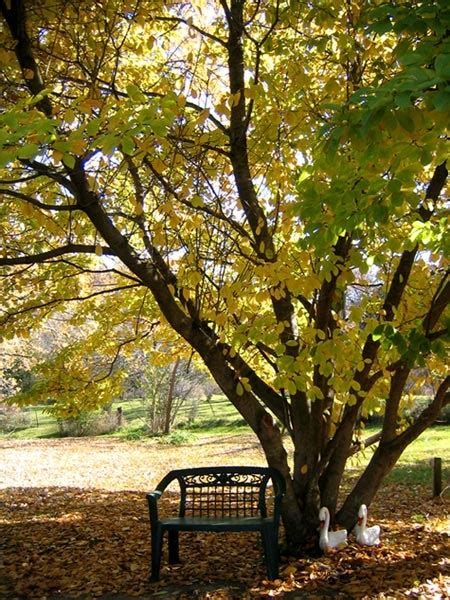Trees For Backyard Shade by 11 Best Images About The Of Shade Trees On