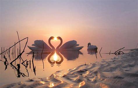 imagenes hermosas unicas tres joli fond d ecran blog de sylvia17455