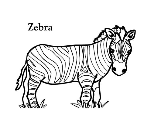 printable coloring page of a zebra coloring pages zebra clipart best
