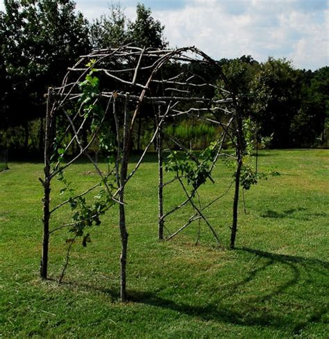 grape trellis from branches gardening pinterest grape trellis grape arbor and gardens