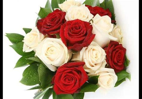 imagenes de rosas rojas frescas fotos de ramos de rosas rojas y blancas imagen de rosas