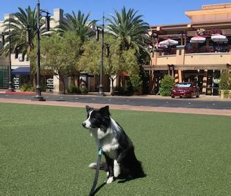 puppy town las vegas america s best cities for dogs