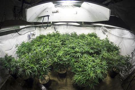 growing lights    indoor weed plants