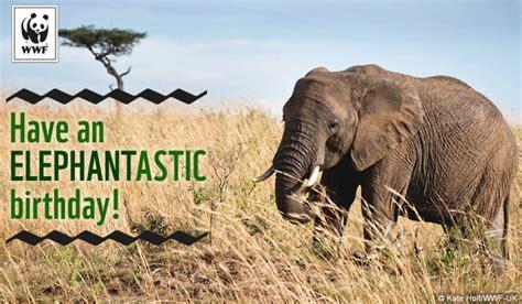 Free Printable Elephant Birthday Cards