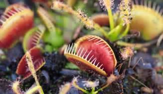 plante carnivore les choisir et les entretenir