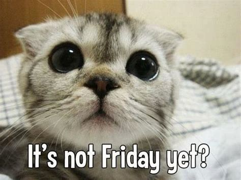 Is It Friday Yet Meme - it s not friday yet jokes memes pictures