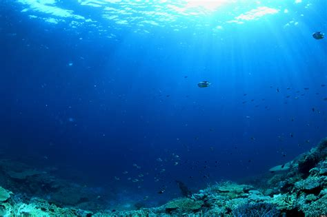ocean s oceans play a key role in maintaining global carbon cycle