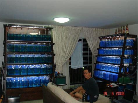fish room water change system guppy fish room jabra s fancy guppies update on my fish room 2017 fish tank maintenance