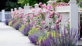 David Austin Patio Roses Street Side Of Front Yard Fence Plantings Increase Your