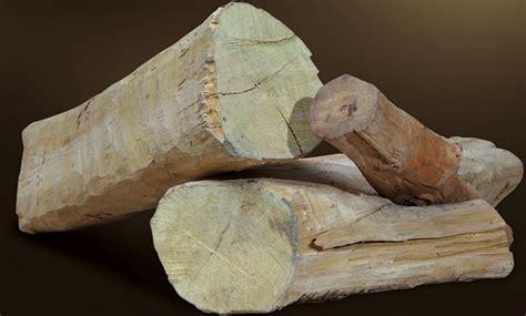 tanaman cendana sandalwood bibitbungacom
