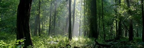 Forest Mba Gre by Mit Examines Sustainable Business Future Metromba