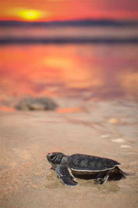 neil gorsuch fly fishing 25 best ideas about baby sea turtles on pinterest baby