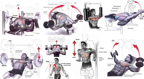 how can i increase my bench press fast how to build chest muscles fast all bodybuilding com