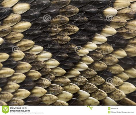 with snake scales stock image image of human design 31920181 snake skin stock image image of texture viper scale 48830879