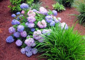 best low maintenance shrubs or flowers for your yard