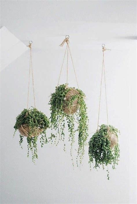 Suspension Pour Plante Interieur 7027 plante suspension interieur fleuriste bulldo
