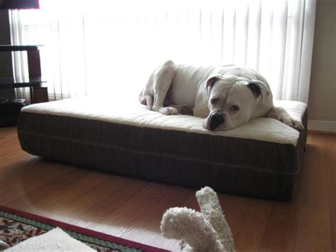 orthopedic dog couch orthopedic dog beds ideas doherty house best design