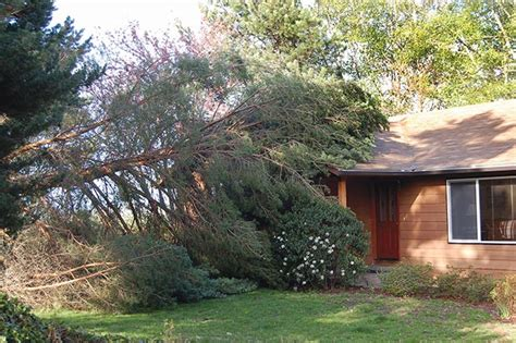 neighbour s tree fell on neighbour s tree fell on my house insurance coverage mbs insurance brokers ltd