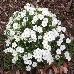Ground cover plants are fairly drought tolerant once established