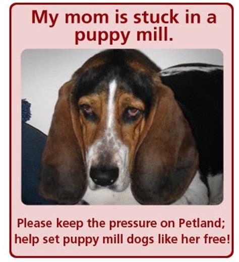 petland puppy mills judge says 2 consumers can sue petland animal coalition