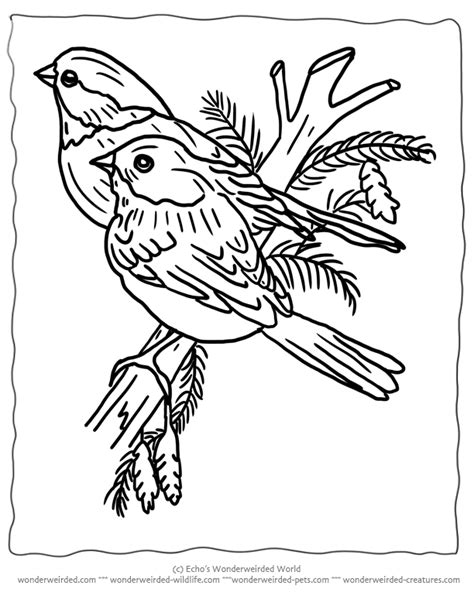 birds to color printable coloring pages birds for wonderweirded