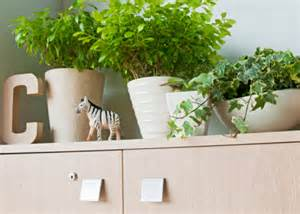 Best Plants For Office With No Windows Ideas 5 Ways To Create A Awesome Office Environment On A Budget