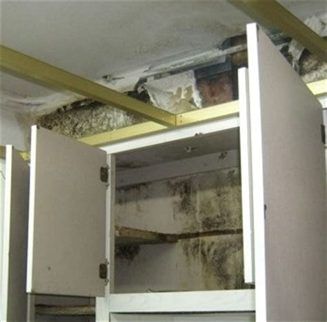 mold in drywall behind kitchen cabinets depression from household mold exposure